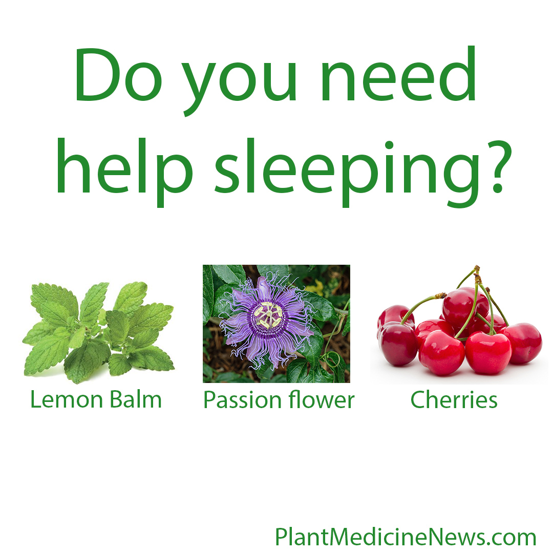 new study identifies plants for promoting sleep plant. Black Bedroom Furniture Sets. Home Design Ideas